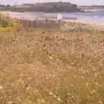 Penthièvre : sa dune fleurie, les chars à voiles et le fort militaire
